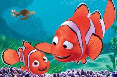 10 Gambar Ikan Nemo Kartun Dan Versi Aslinya Jenis Ikan Badut