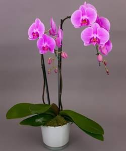 gambar bunga anggrek 1
