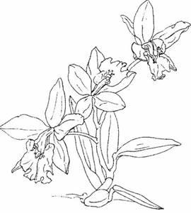 30 Gambar Bunga Anggrek Yang Indah Wallpaper Hd Foto Sketsa