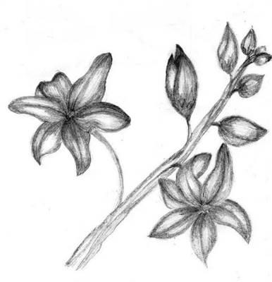 30 Gambar  Bunga  Anggrek yang Indah Wallpaper HD Foto