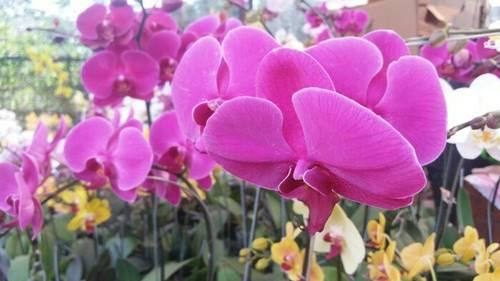 Gambar Bunga Sebagai Wallpaper
